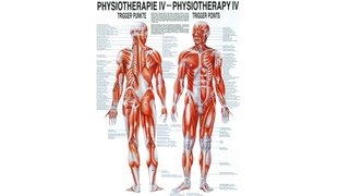 RÜDIGER Poster Physio IV